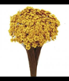 Glixia Amarilla