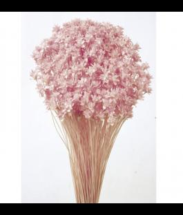 Hill Flower Rosa