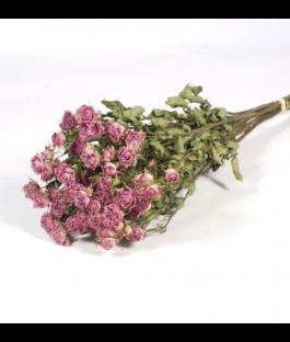 Rosa Preservada Rosa